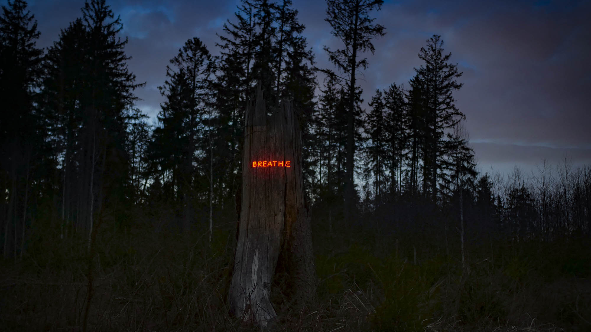 Philipp Frank -artists- künstler - New media - light art - projection - mapping - installation - in  -nature - art -neon,