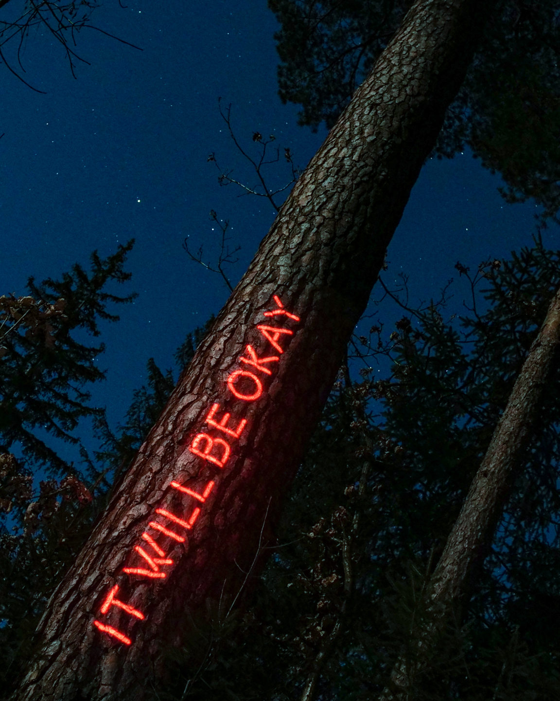 Philipp Frank-Message from the Forest-Neon-light-art-Philipp Frank -artists- künstler - New media - light art - projection - mapping - installation - in  -nature - art -neon,
